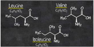 Leucina, un aminoacido importante per la crescita muscolare